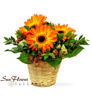 Hot Autumn Flame by Sun Flower Gallery, fall flowers in kennilworth