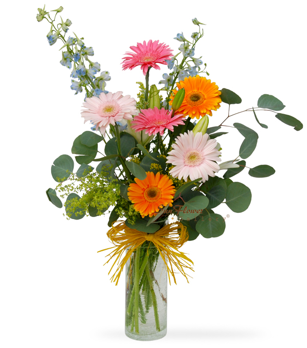 Royal gerberas, birthday flowers, in Glenview, IL by Sun Flower Gallery.